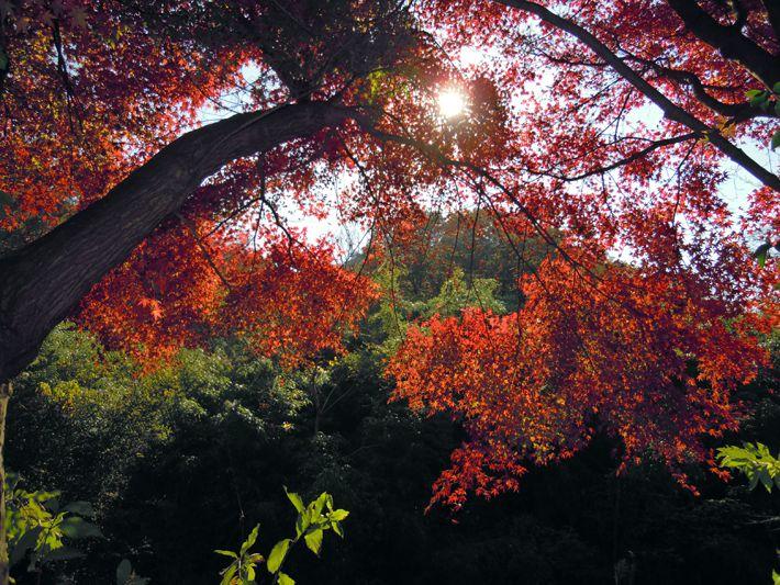 四王寺の森写真